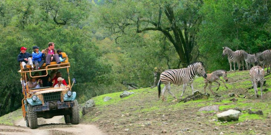 Safari West in Santa Rosa