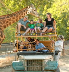 Safari West