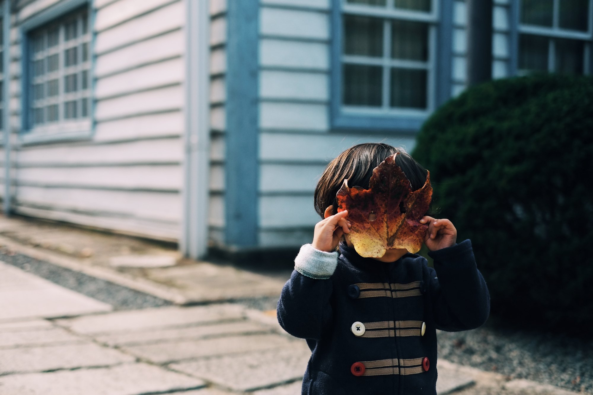 Little boy standing in front of a blue and white house covering his face with a leaf.